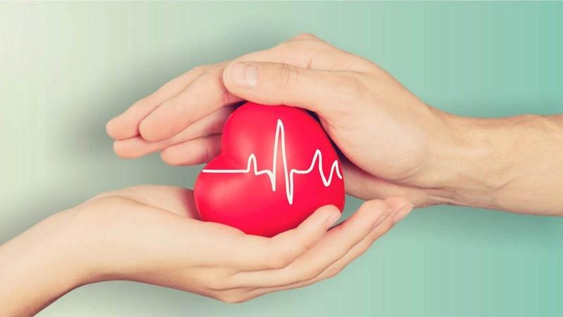 Tinh bộ nghệ tốt cho tim mạch