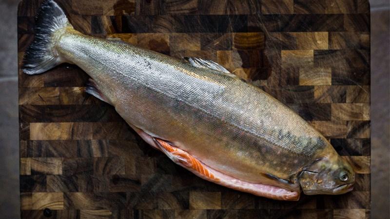Mua thịt cá nguyên con