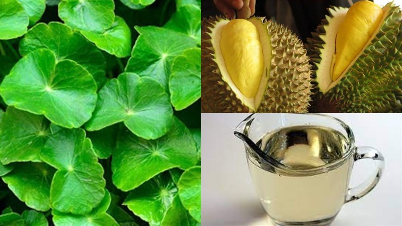 Nguyên liệu món ăn rau má sầu riêng, rau má khoai môn
