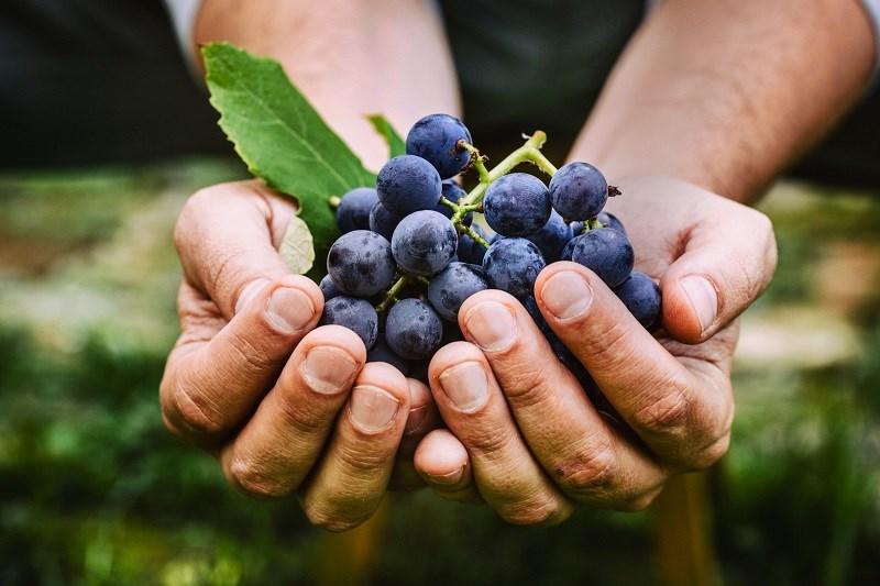 Trái cây giàu axit tannic