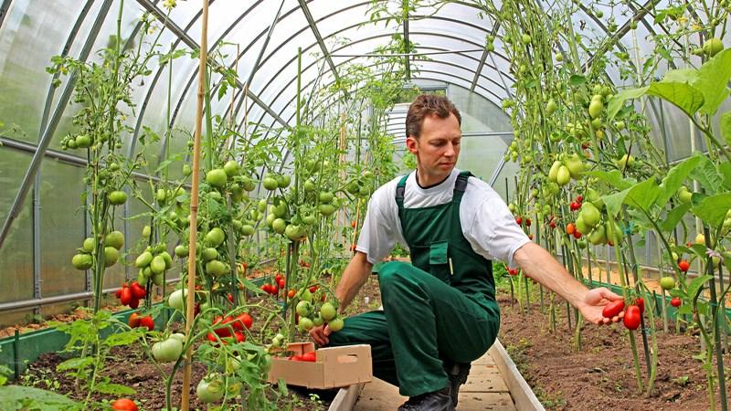 Tự trồng nông sản