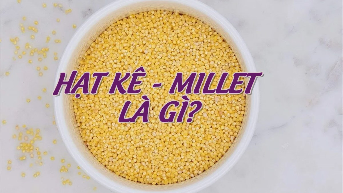 Hạt kê - millet là hạt gì