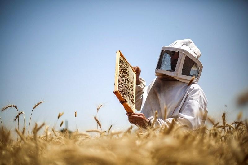 Mật ong manuka là gì?