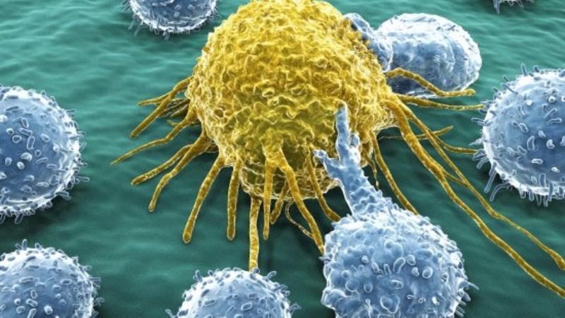 Hỗ trợ phòng ngừa ung thư