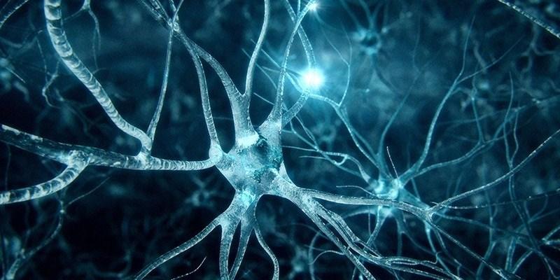 Hỗ trợ hình thành các tế bào thần kinh