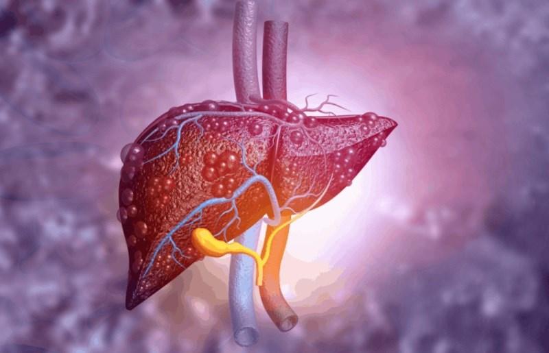 Giúp ngăn ngừa tổn thương gan
