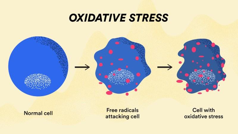 Chống lại stress oxy hóa