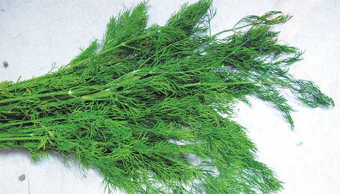 Nhai rau thì là hoặc hạt đậu khấu, đinh hương sẽ kiểm soát mùi hôi miệng