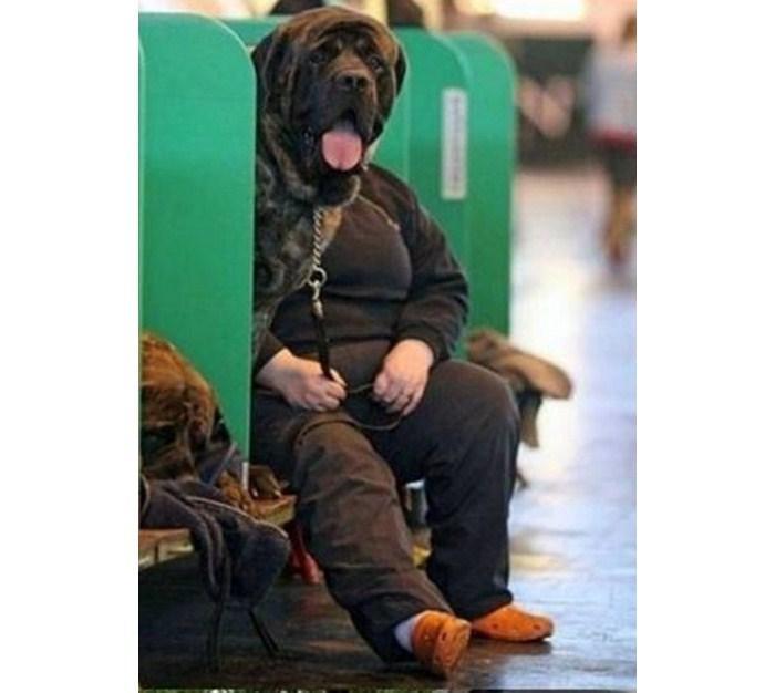 Người mặt chó hay chó thân người?
