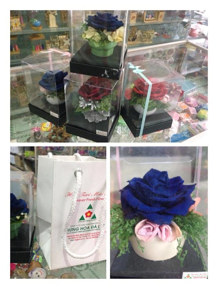 Hoa hồng xanh tươi xử lý giữ màu vĩnh cửu
