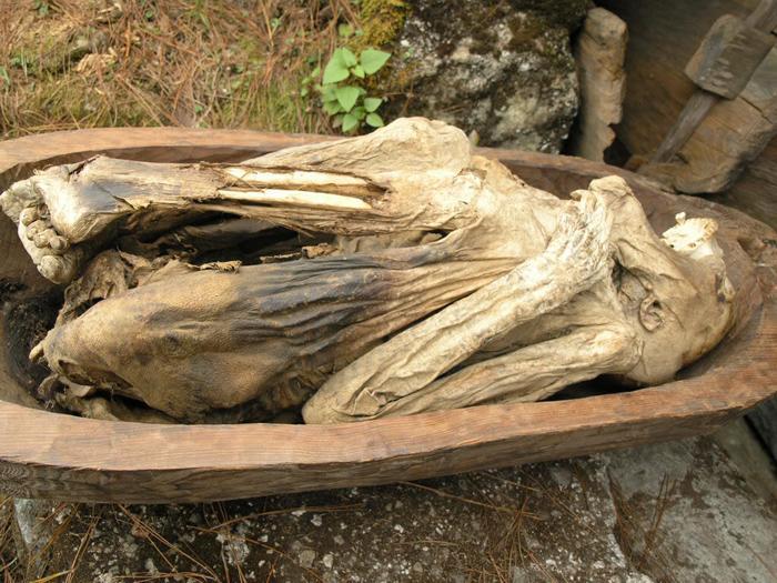Động xác ướp Kabayan