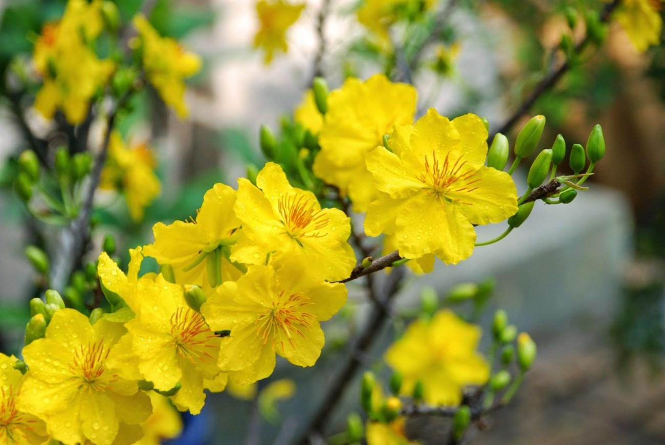 Các loại hoa mùa xuân