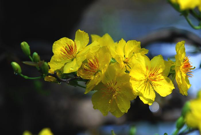 Để hoa nở dịp đầu năm