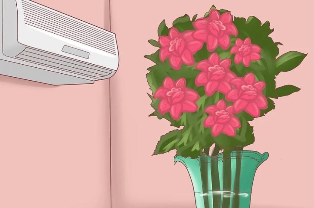 Đem hoa vào nhà có máy lạnh để hạn chế hoa nở