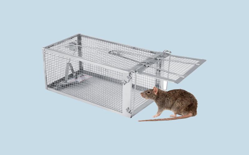 Dùng bẫy chuột bằng lồng sắt