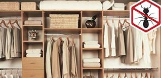 Cách đuổi kiến trong tủ quần áo và phòng tránh chúng quay lại