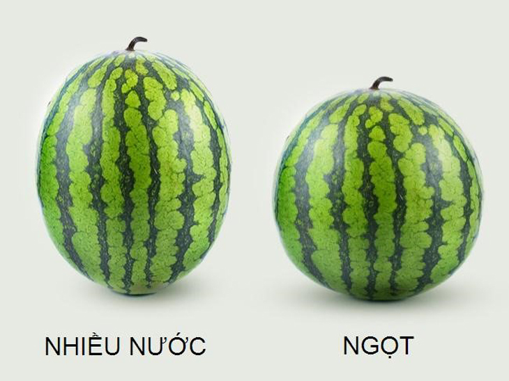 Cách chọn dưa hấu ngon - Xem hình dáng quả dưa