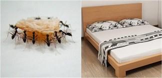 Cách đuổi kiến trên giường nhanh gọn mà không cần hóa chất