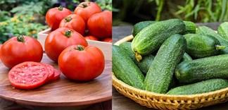 Bí quyết chọn mua cà chua và dưa leo tươi ngon