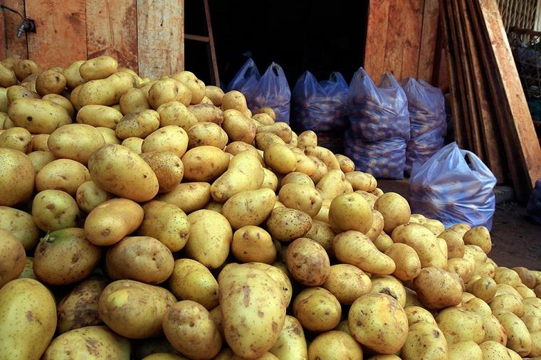Khoai tây Trung Quốc đang được bán tràn lan trên thị trường