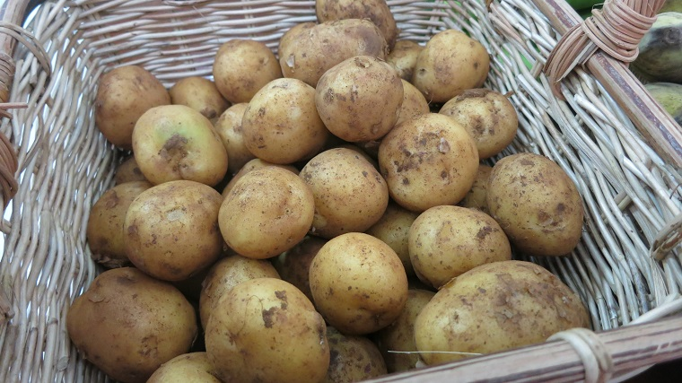 Nhận biết khoai tây Đà Lạt