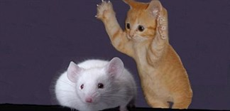 Cách làm keo bẫy chuột cực dễ