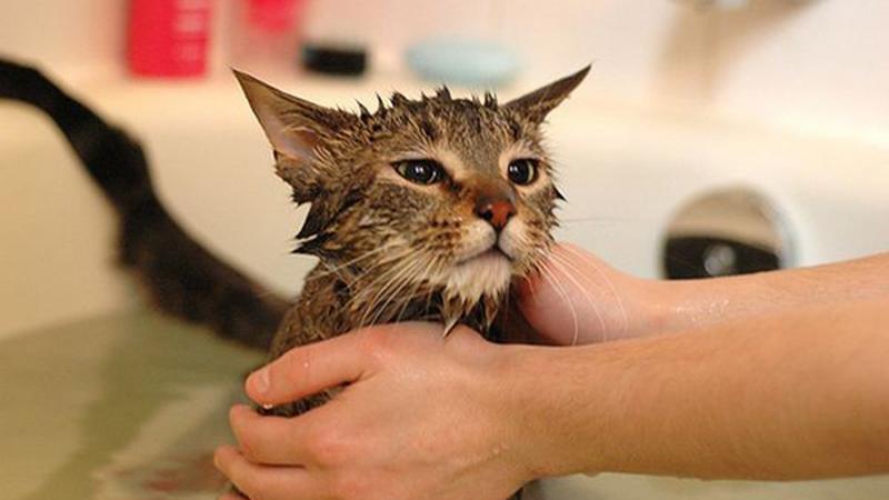Tắm chó mèo thường xuyên