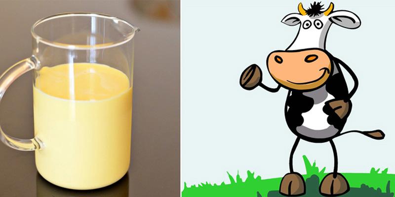 Sữa non từ bò dồi dào hơn các động vật khác và nhiều dưỡng chất hữu ích