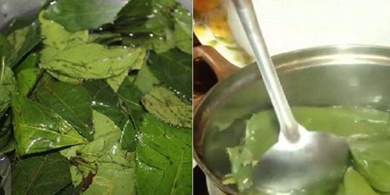 Nên tráng lá trà qua nước sôi trước khi dùng nấu nước tắm bé