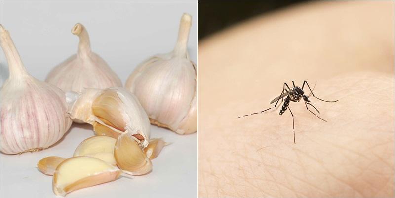 Cách đuổi muỗi bằng tỏi