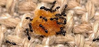 Cách diệt trừ các loại côn trùng trong nhà an toàn, hiệu quả