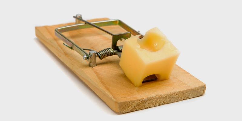 Cách sử dụng bẫy chuột hình chữ nhật