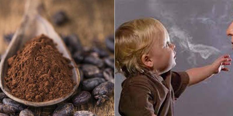 Chất oxy hóa trong cacao giúp bảo vệ bé khỏi tác động của khói thuốc