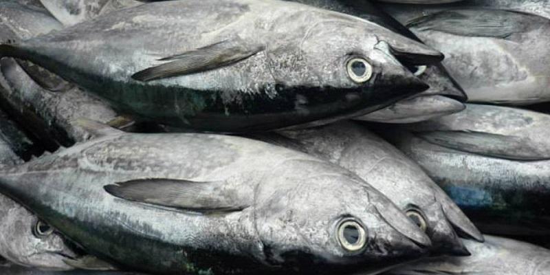 Cá ngừ là loại thực phẩm bổ sung năng lượng rất tốt