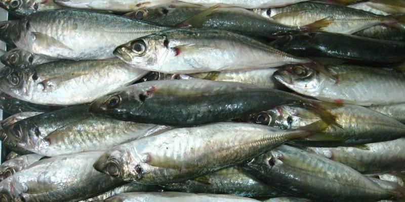 Cá nục rất giàu dinh dưỡng