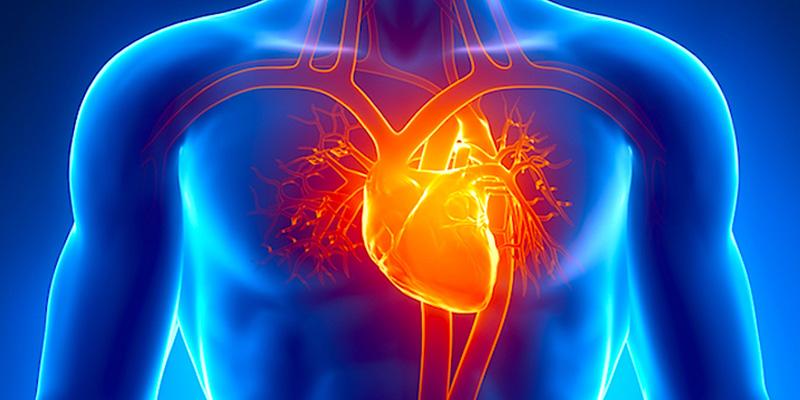 Giúp cải thiện sức khỏe tim mạch