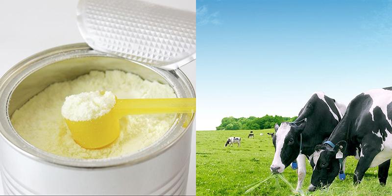 Sữa bột nguyên kem là gì?