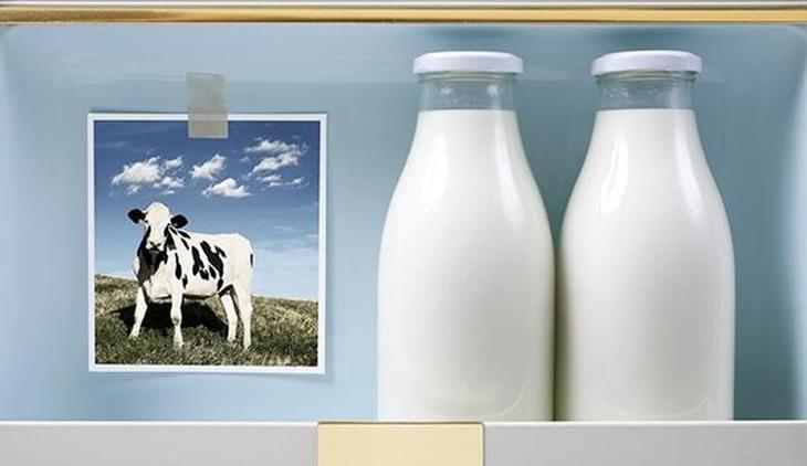 Sữa tươi trên thị trường là sữa động vật đã qua xử lý thanh trùng hay tiệt trùng