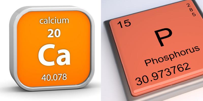 Tỷ lệ Ca/P và tầm quan trọng của nó với cơ thể-2