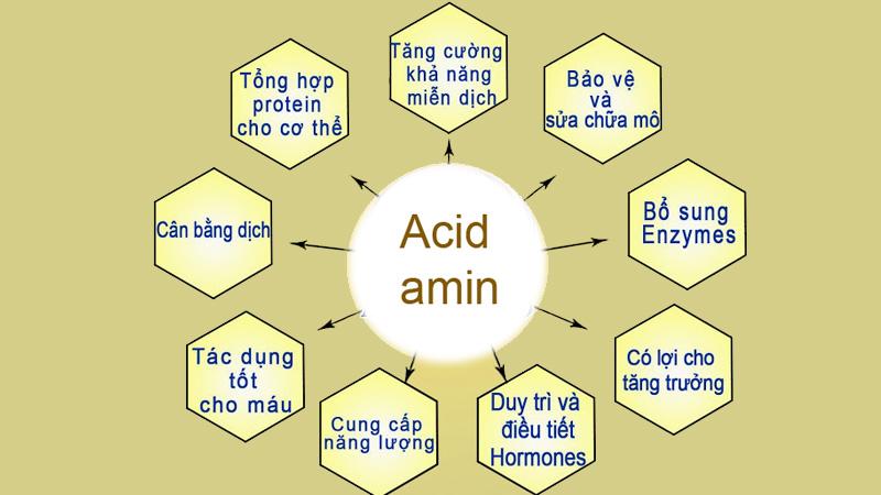 9 acid amin thiết yếu và vai trò của nó với cơ thể-2