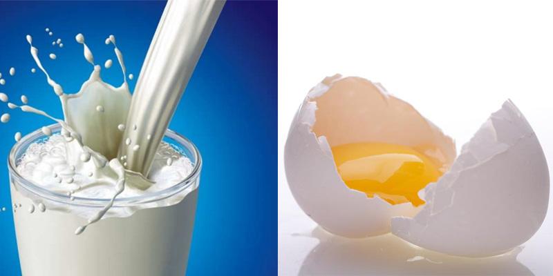 Protein từ sữa và trứng là protein lý tưởng