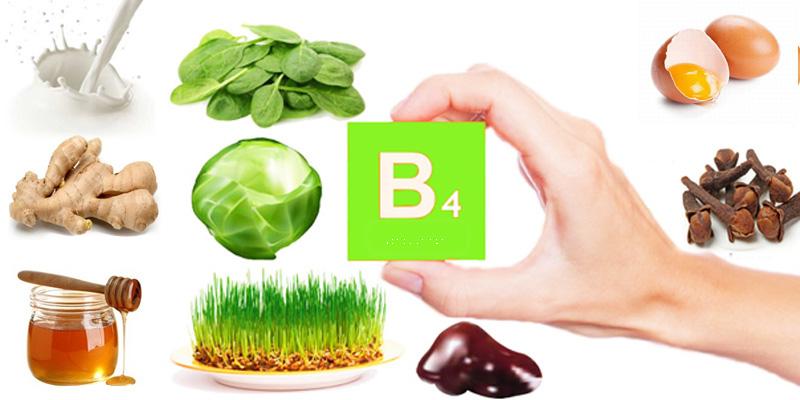 Vitamin B4 và những điều chưa biết-3