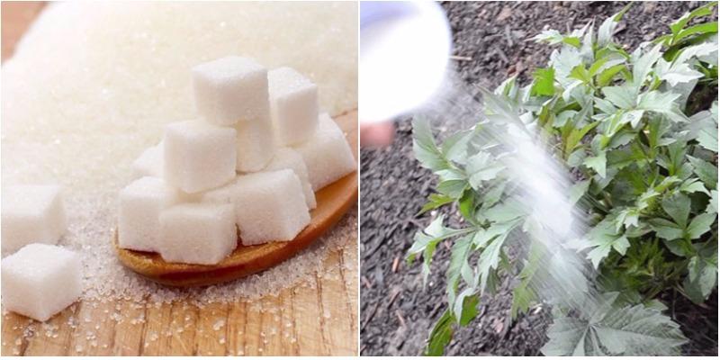 Những lợi ích cực hay từ đường trắng