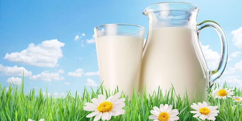 Phục hồi khả năng chống dính của chảo bằng sữa tươi