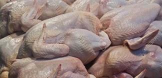 Cách chọn mua gà không bị bệnh cúm gia cầm