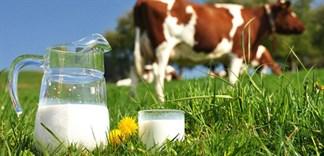 Uống sữa bò có tốt không?