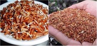 Gạo mầm hay gạo lứt, ăn loại nào sẽ tốt cho sức khỏe hơn?