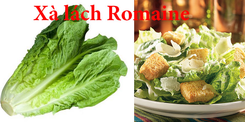 Xà lách Romaine