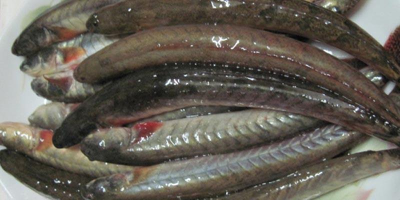 Cá kèo giàu Protein, ít chất béo, nhiều Vitamin B2, D, E, PP, có đầy đủ những khoáng chất như: Ca, P, Fe, S, Fe, P…