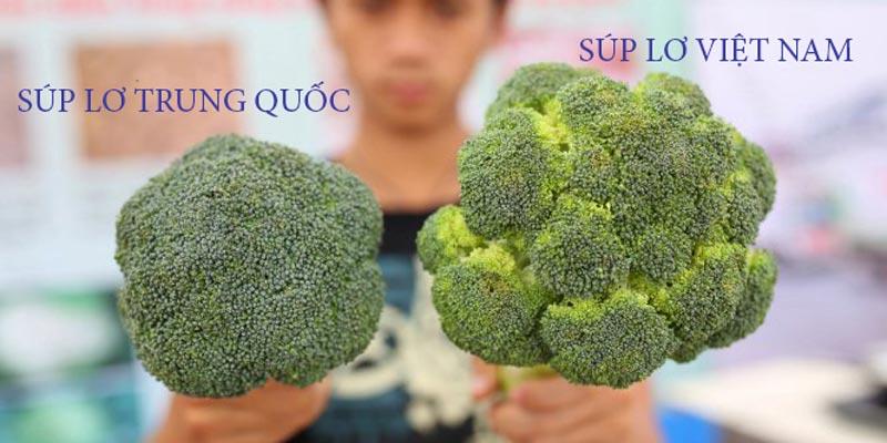 Bên trái là súp lơ Trung Quốc, bên phải là súp lơ Việt Nam.